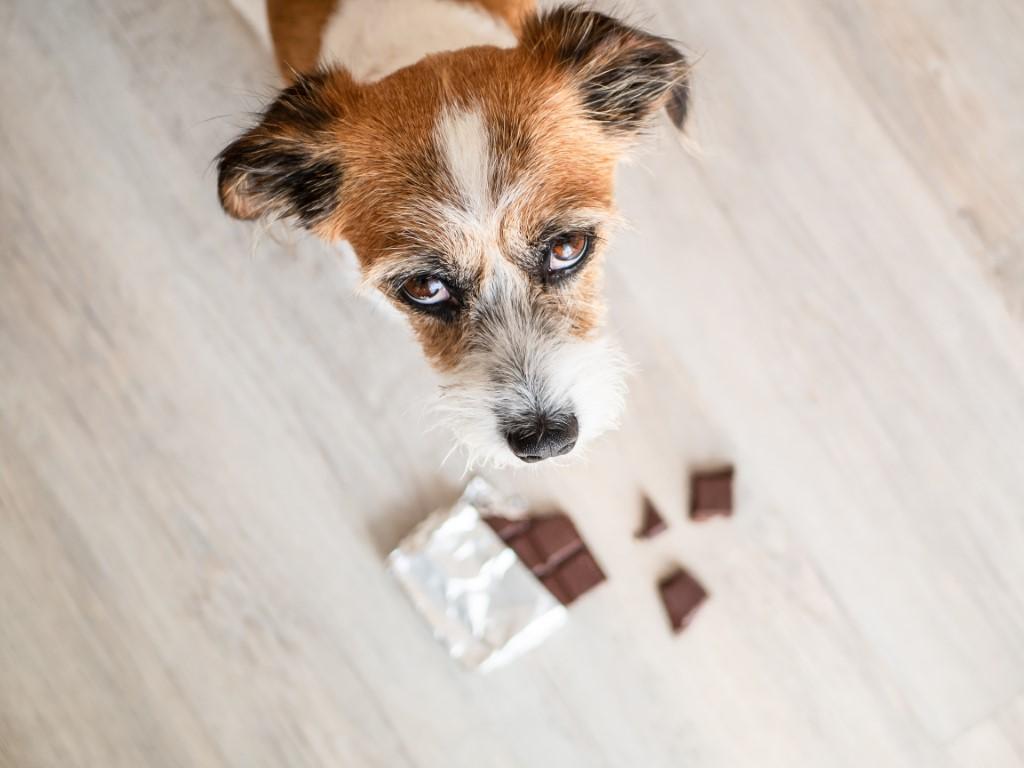 chien et chocolat